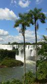 Palm and waterfalls — Stock Photo