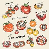 Pomodori vari — Vettoriale Stock
