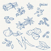 Spices doodles — Stock Vector