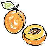 Whole and half apricot — Stock Vector