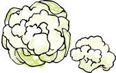 Cauliflower heads — Stock Vector