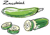 Fresh sliced  zucchini courgette — Stock Vector