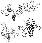 Grapes & vine ornament — Stock Vector