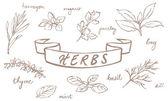 Fresh herbs — Stock Vector