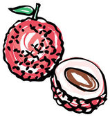 Whole and half Lychee — Stock Vector