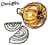 Fresh onion whole & sliced — Stock Vector