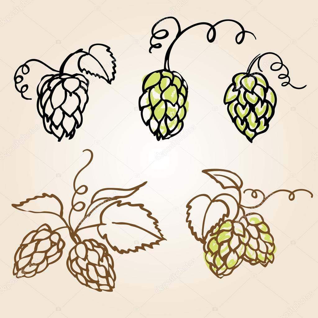 各种啤酒花矢量图— vector