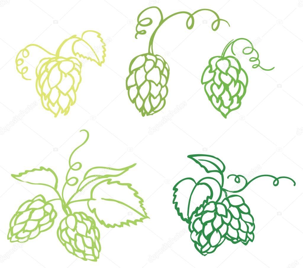 啤酒花的插图 — 图库矢量图像08