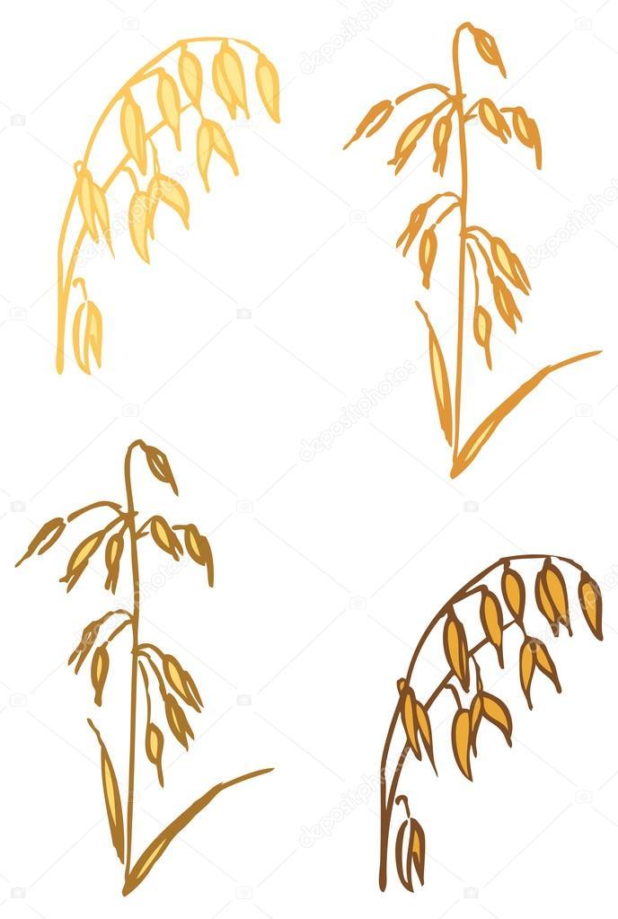 燕麦矢量图– 图库插图