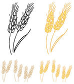 Wheat barley ears — Stockvektor