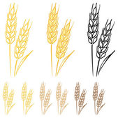 Wheat barley ears — Stock Vector