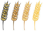 Wheat barley ears — Stockvector