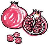 Whole and half pomegranates — Stock Vector