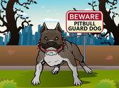Pit bull dog — Stock Photo