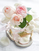Cream roses — Stock Photo