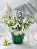 Snowdrops and willow bucket — Stock Photo