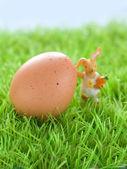 Egg with rabbit — Stock Photo