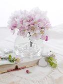 Pembe elma çiçeği — Stok fotoğraf