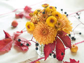 Autumn flowers — Stockfoto