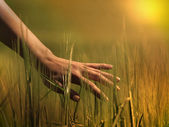 Hand in a field — Stockfoto