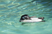 Penguin — Стоковое фото