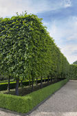 Formální zahrady — Stock fotografie