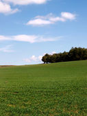 Agricultural green field with bright blue sky background — Stock Photo