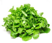 Green lettuce — Stock Photo