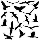 Vector Collection of Bird Silhouettes — Stock Vector