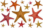Starfish background — Stockfoto