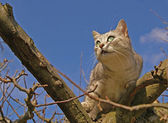 Cat climbing on the tree — Stock Photo
