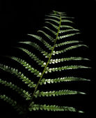 Leaves of bracken — Stock Photo