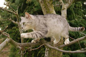 Cat climbs a tree — Stock Photo