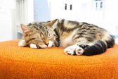 A cat sleep on orange sofa — Stock Photo