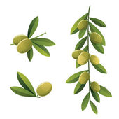 Green olive branches — Stock Vector