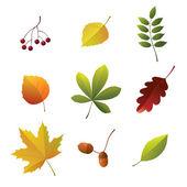 Detalhes de outono — Vetorial Stock