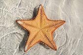 Deniz yıldızı baş aşağı — Stok fotoğraf