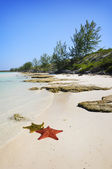 Cayo Guillermo, cuba — Stock Photo