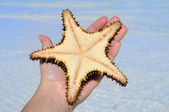Hand holding starfish — Stock Photo