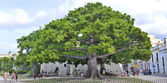 Old Havana plaza panorama with ceiba tree, August 2009 — Stock Photo