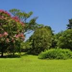 Green trees under blue sky — Stock Photo #48565475