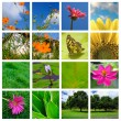 Spring and nature collage — Stock Photo #48573623
