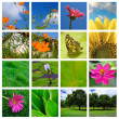 Spring and nature collage — Stock Photo