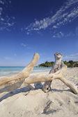 Playa de Jibacoa, cuba — Foto de Stock