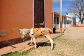 Mule on rustic street — Stock Photo