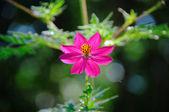 Tropical Wildflower — Stockfoto