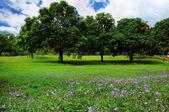Summer trees landscape — Stock Photo