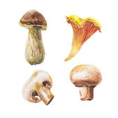 Watercolor mushrooms set — Stock Photo