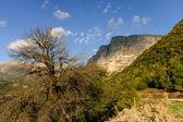 Vikos gorge — Stock Photo