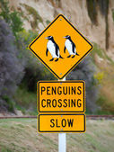 Penguins crossing road  roadsigns — Stock Photo